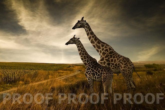 RAW Photo Editing Software & Raw Converter - Corel AfterShot